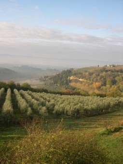 tuscany italy vacation homes